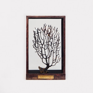 Botanical Frame D03 - Copper