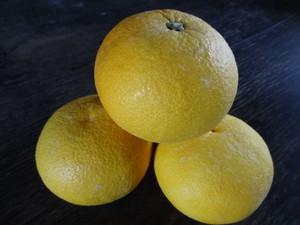 【今が旬】【数量限定】晩白柚(ばんぺいゆ) 5kg前後