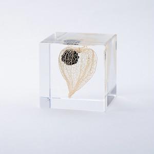 ウサギノネドコ Sola cube ホオズキ