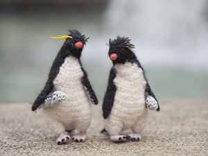 やぶにらみのイワトビペンギン