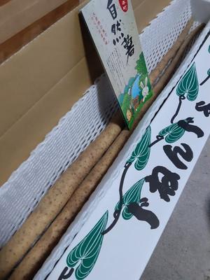 川根本町産 自然薯(約1kg)