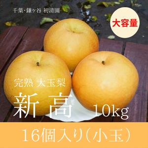 【ジューシーな大玉梨】新高小玉 16個入り 10kg
