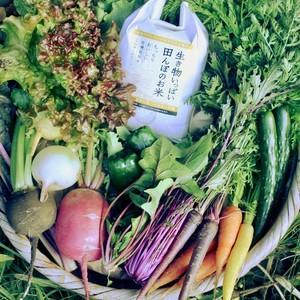 お米とお野菜のセットS(送料別途)