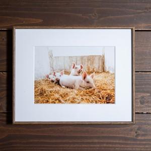 Photo Frame A4(豚)