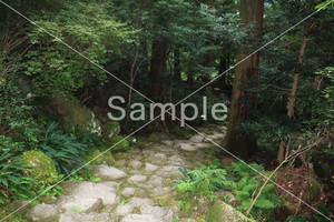 熊野古道-Kumano Kodo