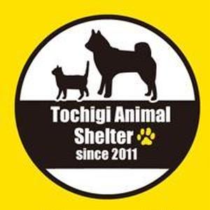 栃木動物緊急避難所専用ドッグフード 20kg