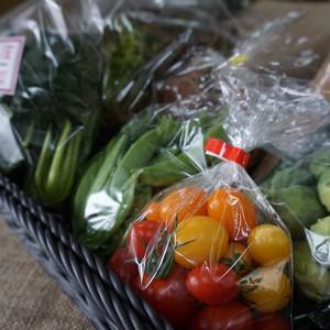 元気あっぷむら / 高根沢の生産者が育てた旬の野菜セット