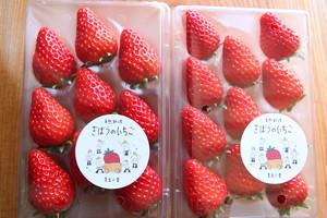 きぼうのいちご・虫食いきぼうのいちごセット(品種 紅ほっぺ)