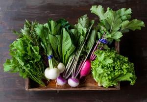 FIO野菜 Lセット(ファミリー向け 大きめセット)