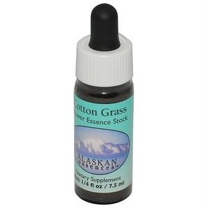 コットングラス[Cotton Grass]