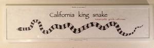 カリフォルニアキングスネーク