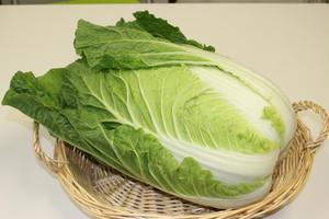 茨城県産 白菜 中サイズ (1玉)