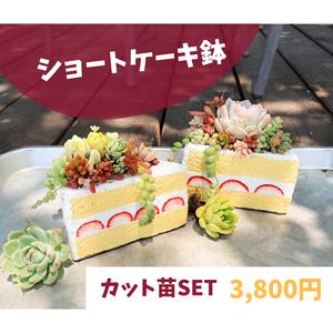 ショートケーキ鉢とカット苗の寄せ植えセット