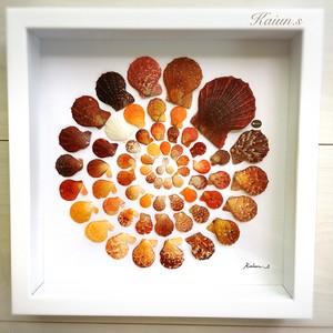【Kai曼荼羅Ⅱ】 貝殻アート