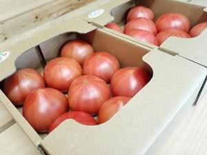 ごほうびトマト 2㎏×2