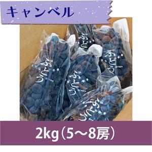 【ぶどう】キャンベル 2kg(5〜8房)