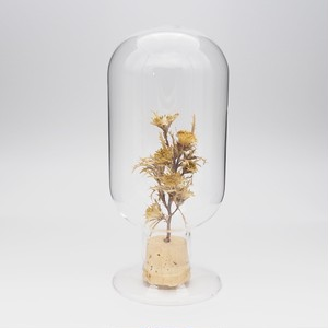 Glass Dome Object/ Dayandora Formosa