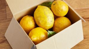 中吉屋の厳選在来種レモン 2kg