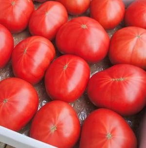 【ご予約受付開始!12月発送予定】フルーツトマト(キズ・変形有)約1,800g☆ご自宅用 高糖度トマト サラダ・カプレーゼにも♪