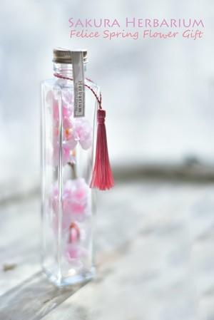 サクラのハーバリウム2(淡色タイプ) タッセル付 角瓶 Lサイズ  【ギフト用(化粧箱入ギフト包装)】Herbarium SAKURA Flower Gift 日本土産 受賞 合格 お祝い 手土産 プレゼント  Present