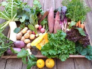 旬の野菜BOXお試し便