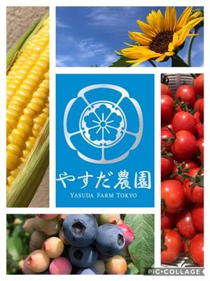 旬野菜セット『夏色』L100サイズ