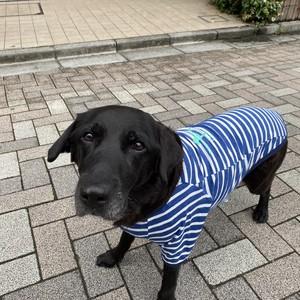 Indigoボーダー Dog Tシャツ【親子コーデ】