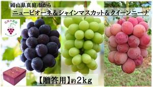 彩り3種ミックス(ピオーネ&シャインマスカット&クイーンニーナ)2kg【贈答用】