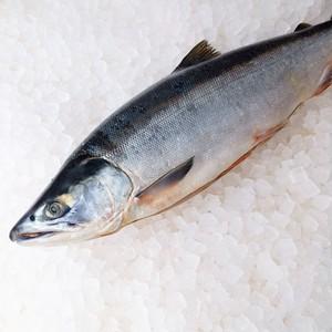 極上北洋産紅鮭(甘塩・小サイズ)半身切身1パック