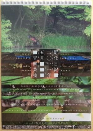 青柳菜摘『孵化日記 2011年5月』
