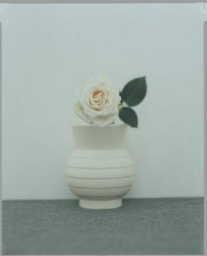 泊昭雄作品 STILL LIFE 06 WHITE ROSE(ホワイトローズ)