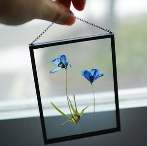 植物絵画:押し花『デルフィニウム』