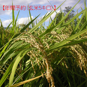 【年間予約】ササニシキ玄米5キロ(平成29年産自然栽培米)