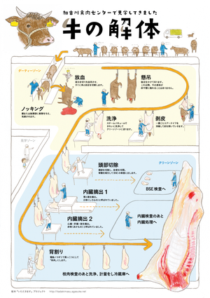 【PDF】牛の解体 〜加古川食肉センターで見学してきました。