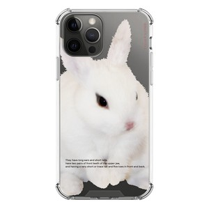 【that's a point】rabbit / iphone スマホ ケース カバー  ジェリー ソフト ハード  韓国 雑貨