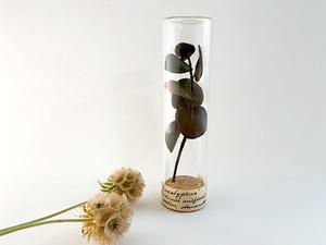 Herbarium : 染花の標本ボトル (L)【ユーカリの枝】