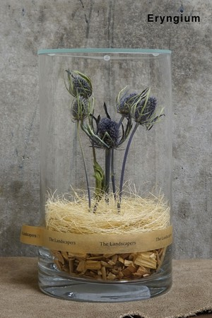 DC20 with LID『Eryngium』(ガラス蓋付)