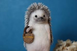 Shopping Hedgehog 恋するお買い物ハリネズミさん