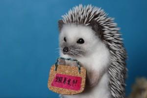Messaging Hedgehog 伝言ハリネズミさん