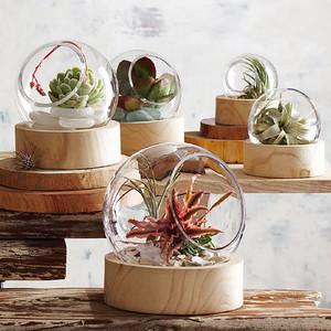 Roost ルースト Orbit Terrarium テラリウム ガラス鉢 x Wood XS