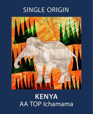 会員限定 ケニア AA トップ イチャママ 100g