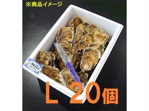 20個セット  カキえもん L 厚岸産  029-Set-KL20