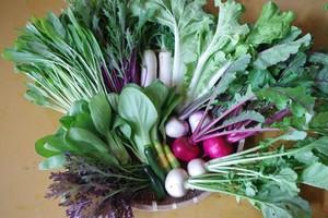 【定期便|月1回】Mサイズ(送料込)_無農薬有機野菜セット