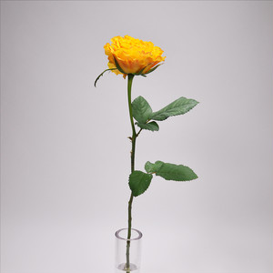Rose  マンゴーリーバ 10本 (JA静岡市)