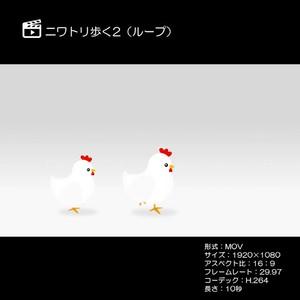 ニワトリ歩く2(ループ)