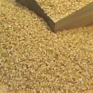 天国の野菜のお米・コシヒカリ(玄米)5kg入り