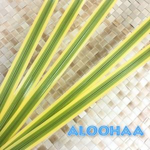 コンシンネホワイボリー 5本set ライトグリーン 黄色縁【細】針金入り変形自在 タヒチアンダンス