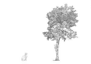 世界にたった一つだけの場所 - 木とネコ