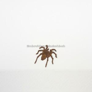 タランチュラ 刺繍ワッペン 蜘蛛 昆虫 虫