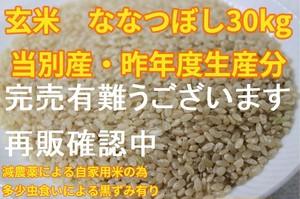 当別の農家さんの自家用米 ななつぼし30kg(要精米)